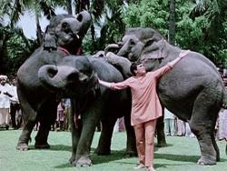 Prietenii mei elefantii